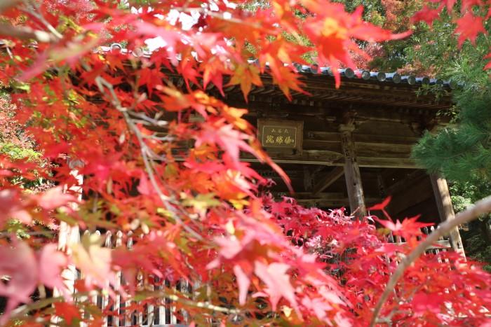 2018.11.14紅葉(伽耶院) (8)